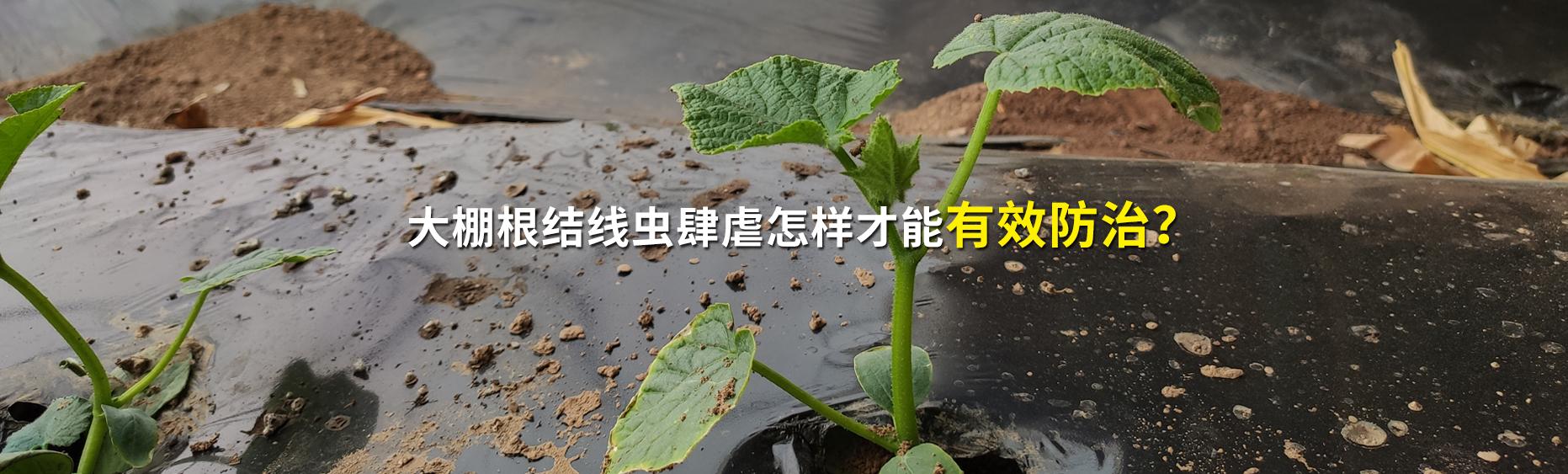 玉米专用肥