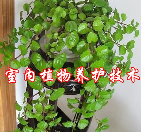 室内植物养护技术