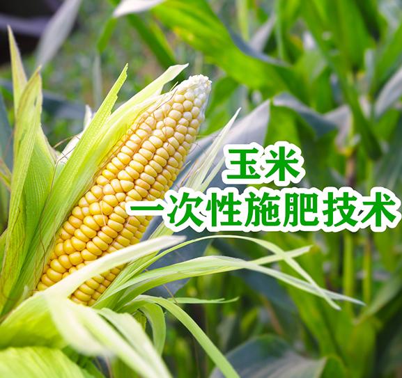 玉米一次性施肥