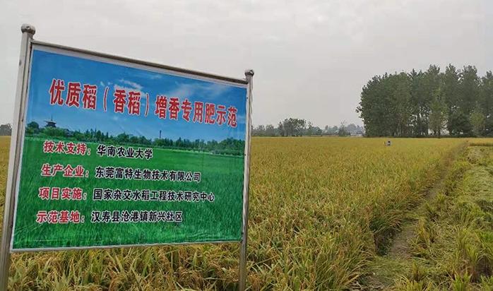 汉寿县増香专用肥项目