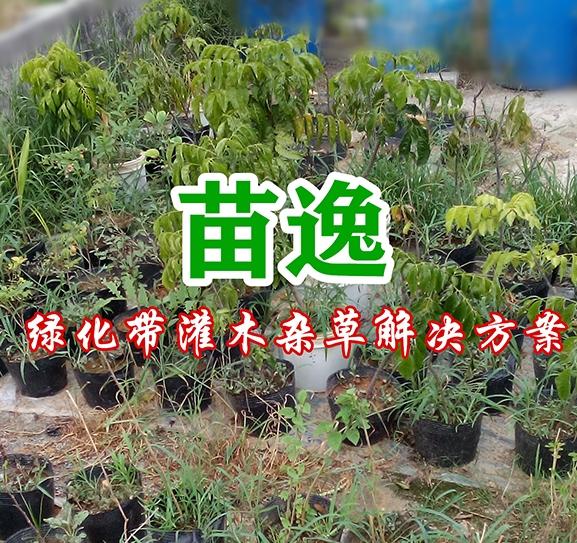 苗逸(绿化带灌木杂草解决方案)