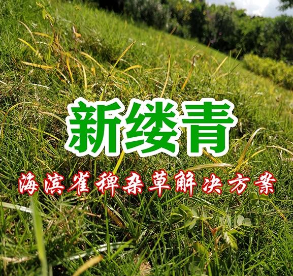 新缕青(海滨雀稗杂草解决方案)