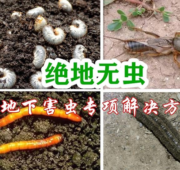 绝地无虫(地下害虫专项解决方案)