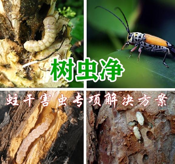 树虫净(蛀干害虫专项解决方案)