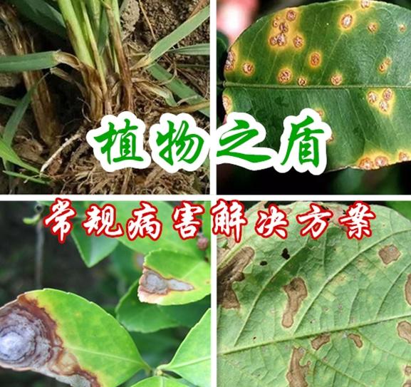 植物之盾(常规病害解决方案)