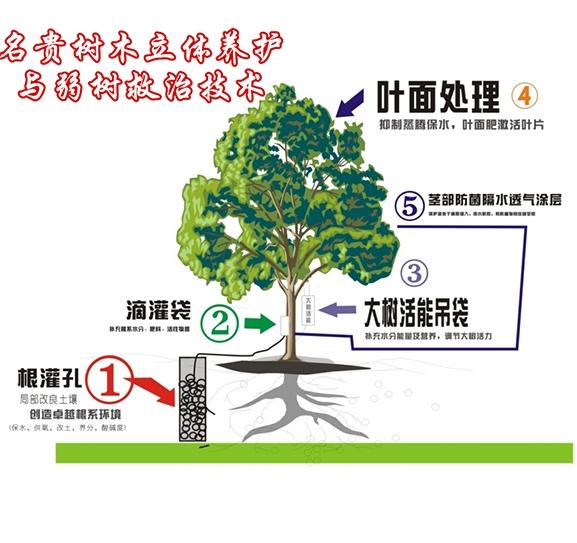 名贵树木立体养护与弱树救治技术