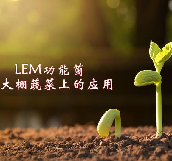 LEM功能菌在大棚蔬菜上的应用