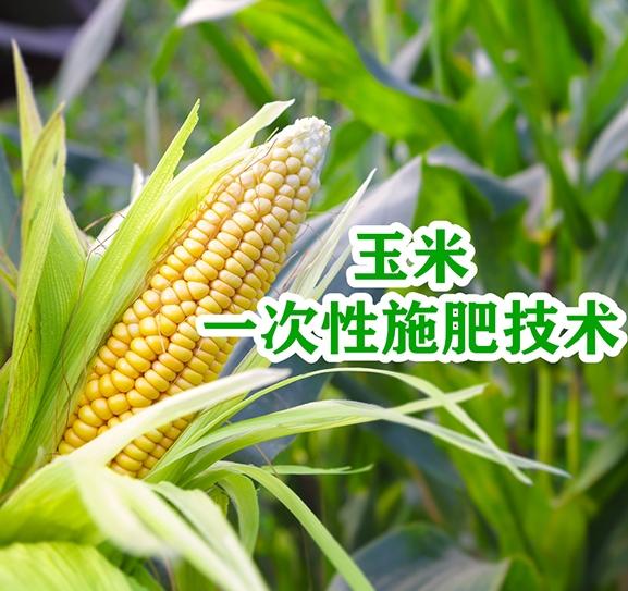 玉米一次性施肥技术