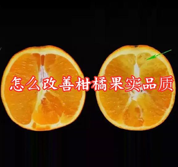 怎样改善柑橘果实品质