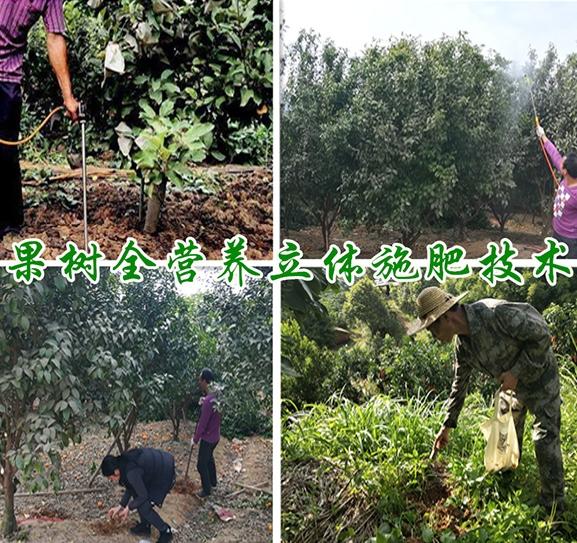 果树全营养立体施肥技术