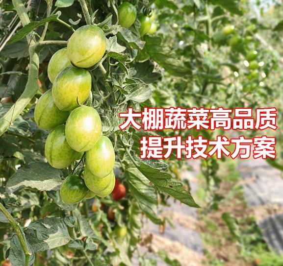 大棚蔬菜品质提升技术方案