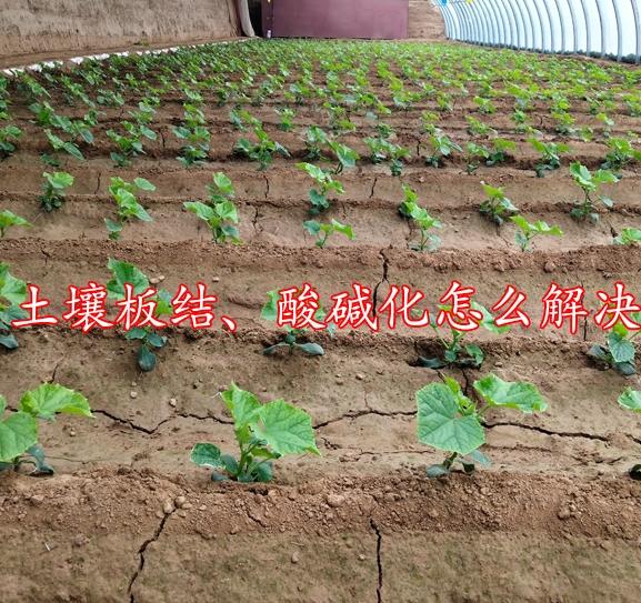 土壤板结、酸碱化怎么解决