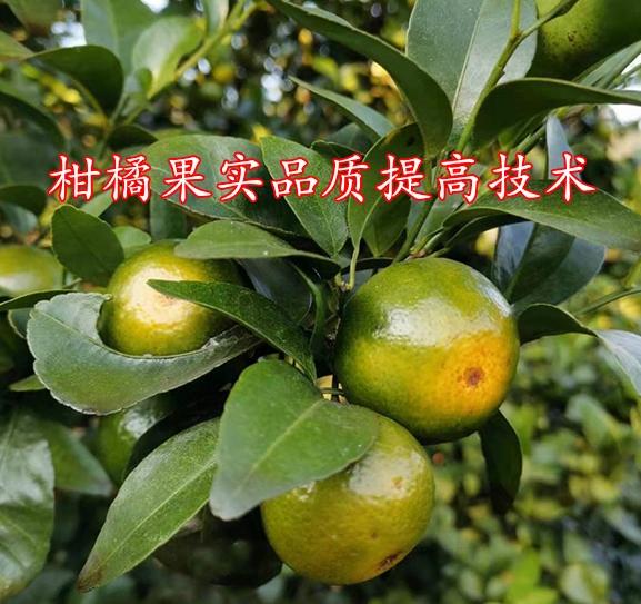 柑橘果实品质提高技术