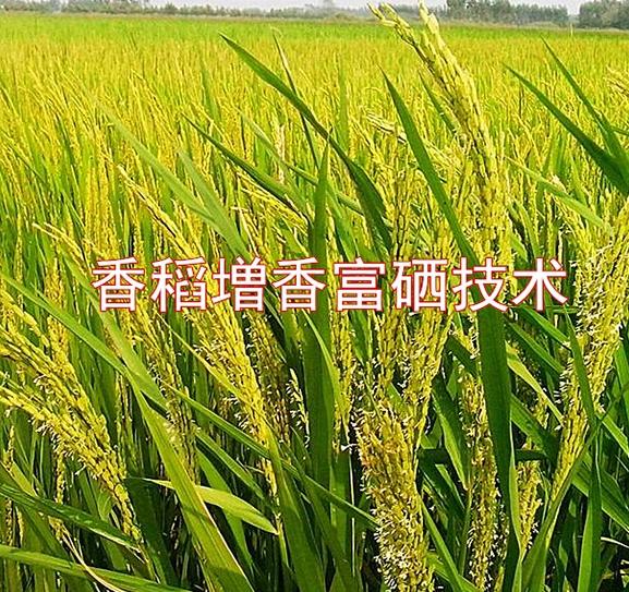 增香富硒富铁富硒,富铁生物先进技术为农户增产增收