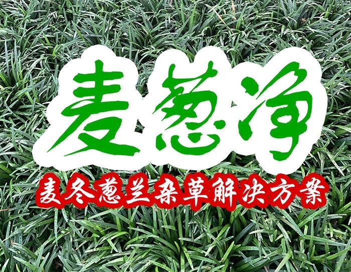 麦葱净(麦冬葱兰杂草解决方案)