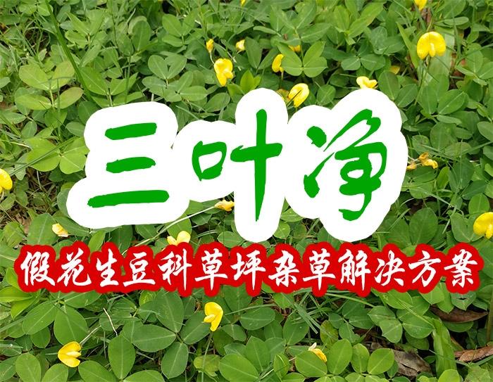 三叶净(假花生豆科草坪杂草解决方案)